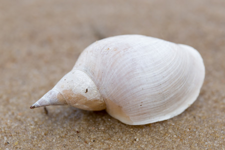 Alone white shell on a sand beach. Close-up Stock Photo