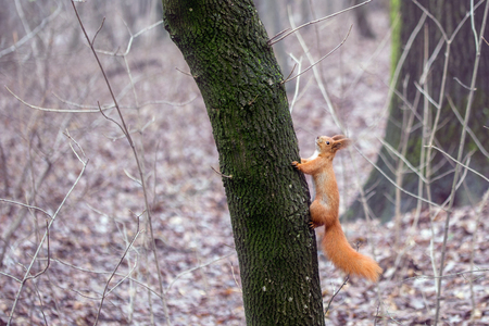 Little cute  squirrel  in a forest. Banque d'images