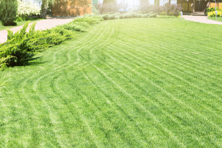 Freshly mowed rows of green lawn at country residence with summerhouse. Hedge of fresh cedars. Landscape design and gardening concept Stock Photo