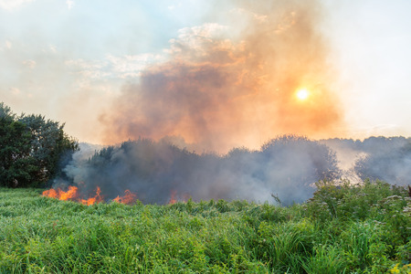 Forest wildfire. Burning field of dry grass and trees. Heavy smoke against blue sky. Wild fire due to hot windy weather in summer 免版税图像 - 102726129
