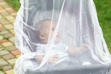 Child in stroller covered with protective net during walk. Baby carriage with anti-mosquito white cover. Midge protection for children during outdoor walking season Zdjęcie Seryjne