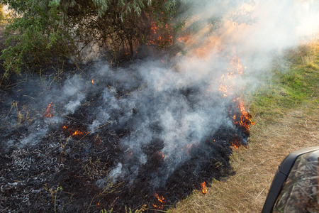 Forest wildfire. Burning field of dry grass and trees. Heavy smoke against blue sky. Wild fire due to hot windy weather in summer. rescuer inspecting disaster area by atv quad bike.
