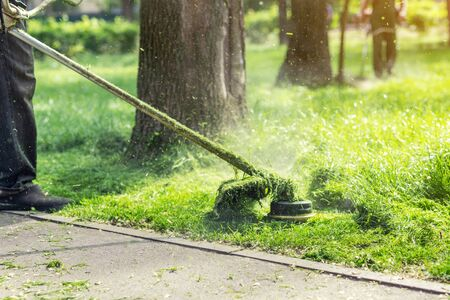 Worker mowing tall grass with electric or petrol lawn trimmer in city park or backyard. Gardening care tools and equipment. Process of lawn trimming with hand mower. Imagens