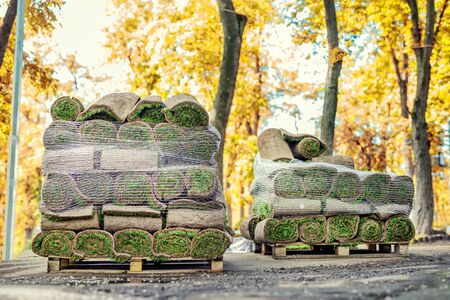 Stacks of green fresh rolled lawn grass on wooden pallet at dirt prepared for installation at city park or backyard in autumn. Trees or forest with golden colored leaves foliage on background.