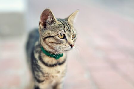 Portrait of cute happy adorable funny small tabby kitten walking outdoors at city street. Beautiful young little cat playing at home backyard. 写真素材