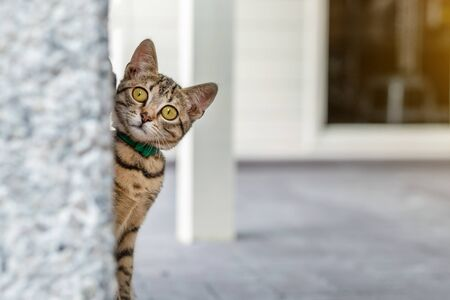 Cute adorable funny small tabby kitten peeking around wall outdoors. Beautiful young little cat playing at home backyard.