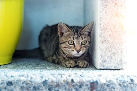 Cute adorable funny small tabby kitten sitting in dark corner while hunting or stalking outdoors. Beautiful young little cat playing at home backyard. 写真素材