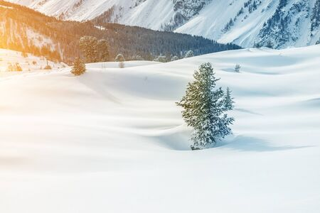 One small alone spruce christmas tree growing on snow covered snowdrift field on highland mountain alpine area. Austrian alps nature winter background landscape. Skiing mountain resort. Reklamní fotografie