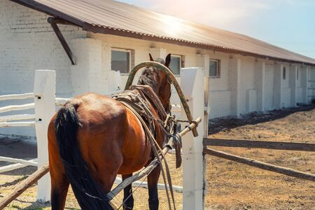 Beautiful chestnut brown horse harnessed with old wooden cart against white brick barn building at farm on background. Natural traditional rural scene. Countryside cottage outdoor landscape. Reklamní fotografie