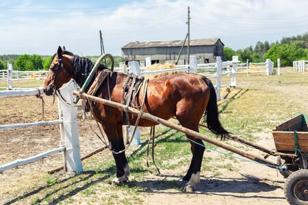 Beautiful chestnut brown horse harnessed with old wooden cart against white brick barn building at farm on background. Natural traditional rural scene. Countryside cottage outdoor landscape Reklamní fotografie