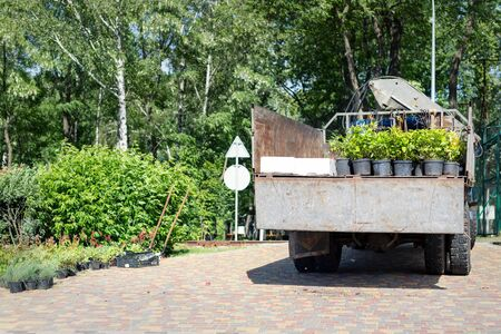 Back view of open truck body delivering from nursery plants and flowers seedlings for gardening at city park or garden. Lanscaping design and replanting of city streets. Cargo vehicle on bright day.