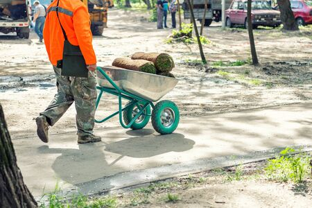 Professional gardener worker laying fresh artificially grown rolled lawn. Detail process of installation grass roll carpet at city park or backyard on bright sunny day . Gardening landcaping service