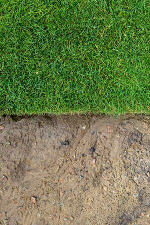 Straigh line of new freshly installed green rolled lawn grass . dirt watered soil prepared for installation at city park or backyard. Before and after laying split.Green Gardening landcaping service.