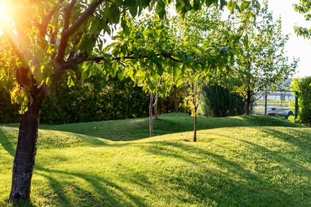 Beautiful green english fruit tree garden with mown grass lawn hills, knolls and hilloks at warm evening sunset day time. Landscape design , maintenance, service and gardening Banque d'images
