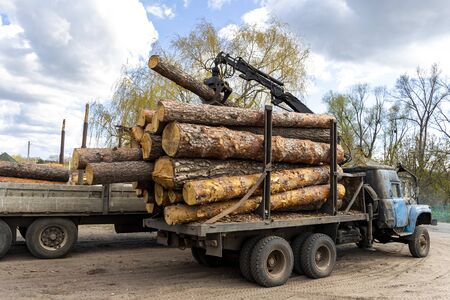 Loading heavy industrial truck trailer with big timber pine, spruce, cedar logs by crane grab loader tractor machine. Pile coniferous lumber shipping at sawmill. Deforestation and nature exploitation.