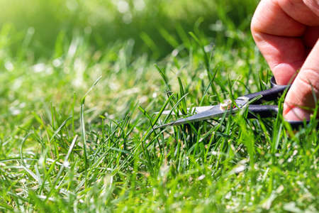 Close-up detail view of man hand cutting green grass on backyard garden with small nail scissors on bright summer sunny day. Accurate perfect lawn mowing care maintenance and service concept