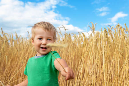 Candid portrait of cute adorable caucasian blond little toddler boy enjoy walking in ripe golden wheatfield giving wheat ear on bright sunny day. Carefree happy childhood at country farm concept