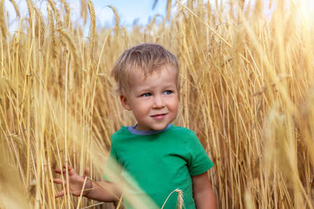 Candid portrait of cute adorable caucasian blond little toddler boy enjoy walking in ripe golden wheatfield looking forward on bright sunny day. Carefree happy childhood at country farm concept