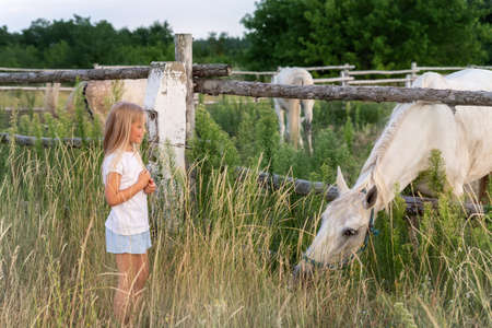 Cute adorable little blond caucasian kid girl meet beautiful white horse near wooden fence at countryside ranch or farm on summer day. Small female child stroking big rural pet foal at grass meadow