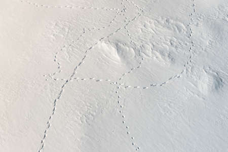 aerial view from above of fresh snow surface texture with snowdrifts and wild animal foot traces on bright cold winter day. Fox, wolf, hare footpath on snowbank after blizard in mountain near forest