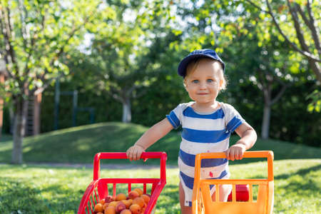 Portrait of small caucasian cute blond toddler boy holding toy shopping cart full of sweet ripe apricots against green tree and lawn in garden. Little happy child enjoy summer fruit harvest time