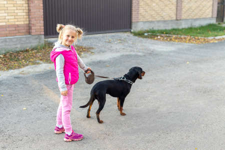 Cute adorable little blond caucasian kid girl walking with german terrier puppy dog leash on sunny day. Animal domestic pet child best friend. Children healthy lifestyle