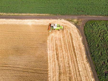 Aerial drone top view Big powerful industrial combine harvester machine reaping golden ripe wheat cereal field on bright summer or autumn day. Agricultural yellow field machinery landscape background