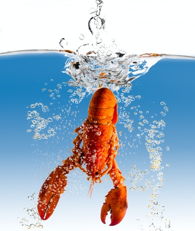 The lobster falls in water photo
