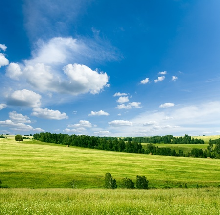 beautiful summer landscape Standard-Bild