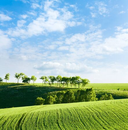 Shoots. Green lines in a field. Stock Photo