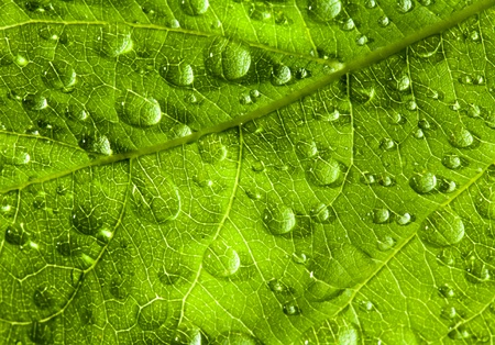 Green leaf texture and drop Stock Photo