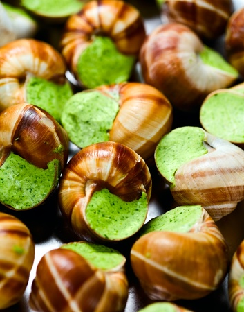 edible snails