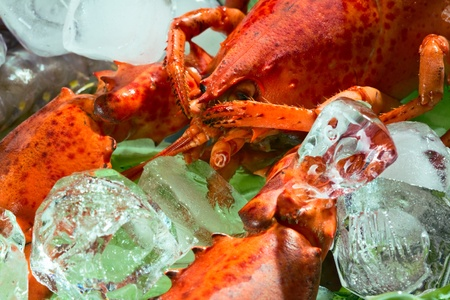 glutton: lobster on the ice with the leafs of lettuce Stock Photo