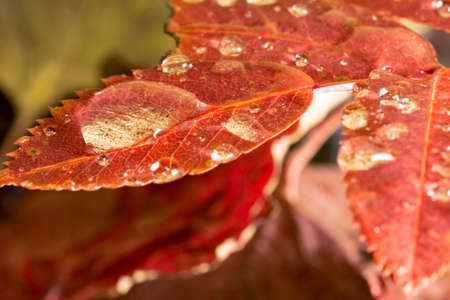 leafs and drops photo