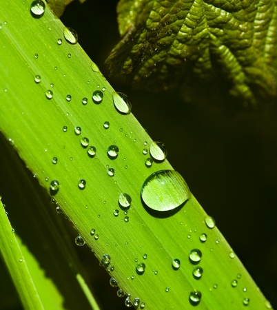 green grass and water drop
