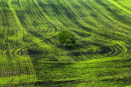 Shoots. Green lines in a field. photo