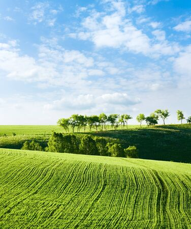 Shoots. Green lines in a field. Stock Photo - 9072714