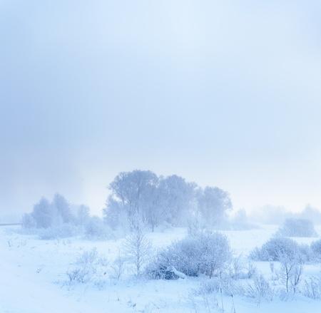 quiet scenery: Winter landscape  Cold winter evening