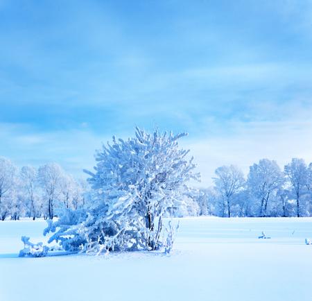 winter evening: Winter landscape. Cold winter evening