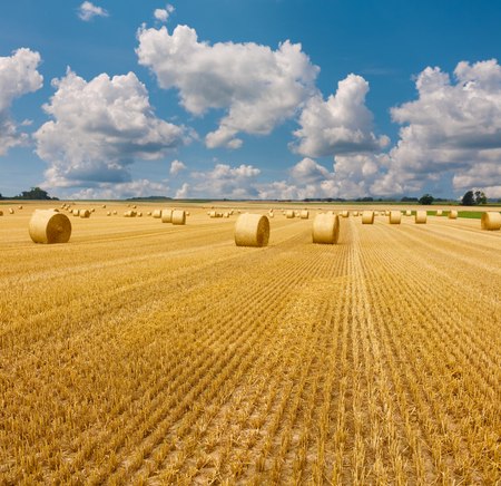 Yellow golden straw bales of hay in the stubble field, summer landscape under a blue sky with clouds Stock Photo - 98181167