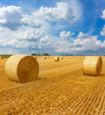 Yellow golden straw bales of hay in the stubble field, agricultural field under a blue sky with clouds Stock Photo