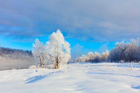Winter landscape. Cold day.