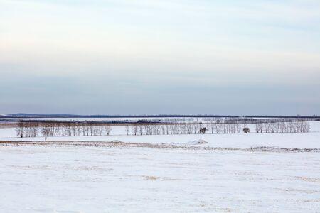 Winter landscape. Cold day. Snow season