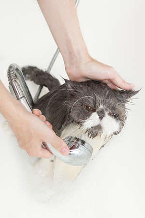 Persian breed cat enjoing a bath in a bathtub photo
