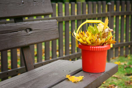 Bright and colorful fall leaves in a plastic bucket standing on the bench photo