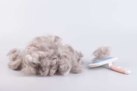 Persian cat raw wool yarn coiled into a ball on white background photo
