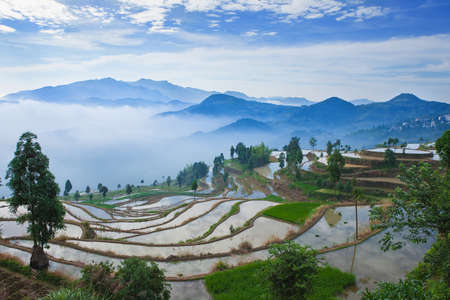phillipine: Rice fields on terraced in sunrise, China