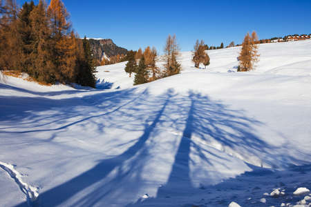 Tree shadow on snowy landscape with view on the Langkofel and Plattkofel (Sassolungo and Sassopiatto) dolomites mountains at the Alpe di Siusi or Seiser Alm in South Tyrol, Dolomites, Italy in winter Stok Fotoğraf