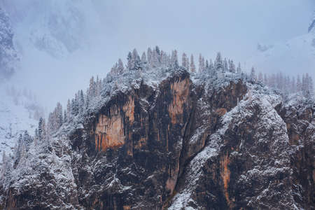Snowy trees under first snow in Dolomites Italy