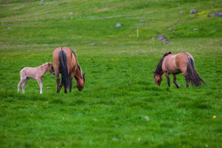 Brown Horse and Her Foal in a Green Field of Grass